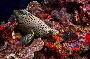 zwart-witte polka dot vis foto