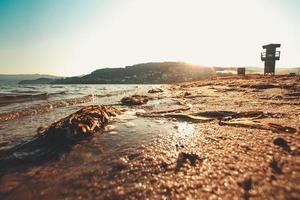 zeewier op strand