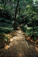 trappen en pad door bomen foto