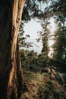 bomen en trappen in de buurt van de jachthaven