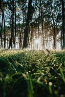 zon schijnt door gras en bomen foto