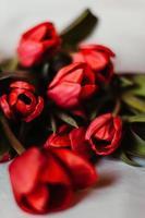 rode tulp bloemen