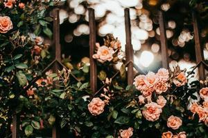 smeedijzeren hek en roze bloemen foto