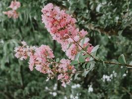 roze en witte bloemen foto