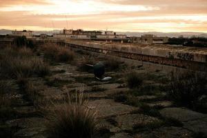 bureaustoel op verlaten terrein foto