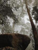 grote rots omgeven door hoge bomen foto
