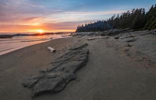 strand met drijfhout bij zonsondergang