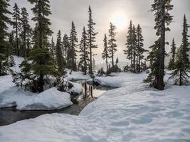 besneeuwde boslandschap foto