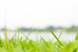 close-up van met gras begroeid groen veld foto