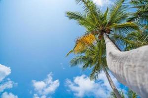 palmbomen en blauwe hemel foto