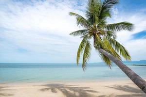 palmboom op tropisch strand