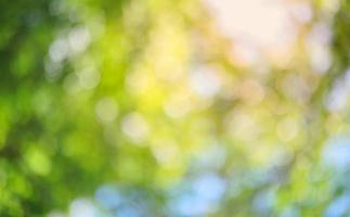 gele en groene bokeh foto
