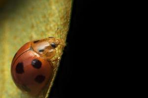 lieveheersbeestje op groen blad foto