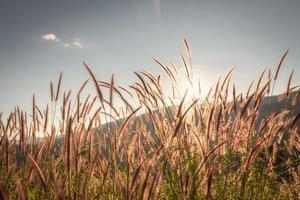gras en bloemen met blauwe hemel
