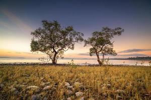 bomen door water bij zonsopgang