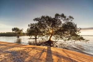 bomen in het water op het strand foto
