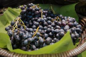 biologische zwarte pitloze druiven in rieten mand foto