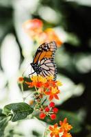 monarchvlinder op bloemen foto