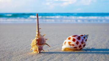 kleurrijke schelpen op het strand in de zomer foto
