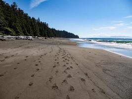 strand kust met groene bomen en blauwe hemel