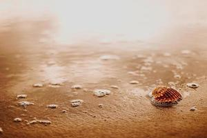 zeeschelp op bruin zand foto