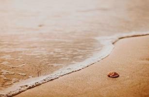 zeeschelp op strand op gouden uur