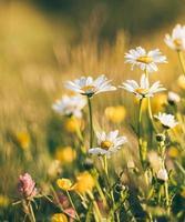 witte en gele bloemen foto