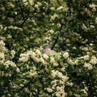 witte en bruine vogel foto