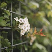 bloeiende planten in de natuur foto