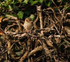bruine vogel op boom foto