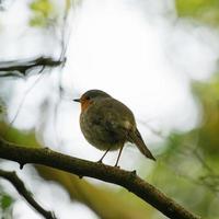 kleine vogel op boomtak foto