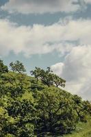 groene bomen onder de blauwe hemel foto