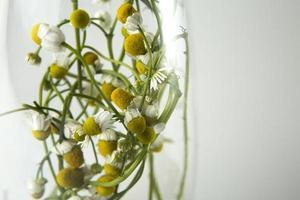 witte multi-petaled bloemen foto