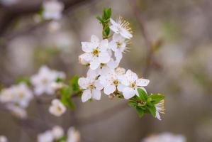 witte bloemen gedurende de dag foto