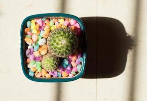 groene cactusplant in grijze pot