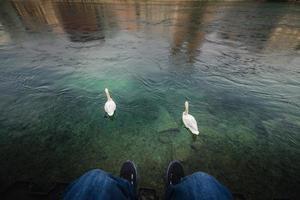 close-up persoon ontspannen naast de rivier in de buurt van zwanen foto