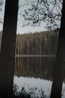groene bomen naast water foto