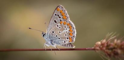 grijze en oranje vlinder foto