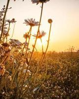 zonsopgang boven veld foto