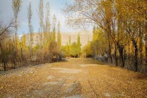 bomen in de herfst seizoen tegen blauwe hemel foto