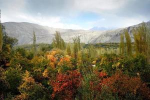 herfst scène van gebladerte foto
