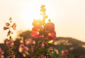 silhouet van bloemen foto