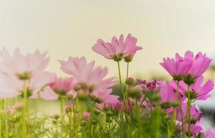 bloemen bloeien in de natuur foto