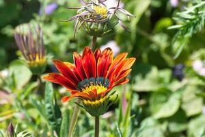 mooie roodoranje bloem