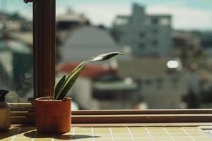 groene plant in pot door raam foto