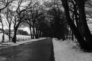 grijswaardenfoto van weg tussen besneeuwd landschap