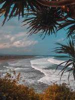 palmbomen in de buurt van de zee foto