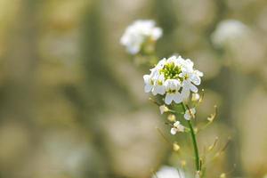 witte bloemen in het veld