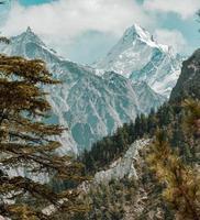 besneeuwde bergen achter groene bomen
