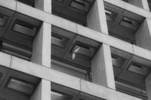 duif die binnen de bouwstructuur vliegt foto